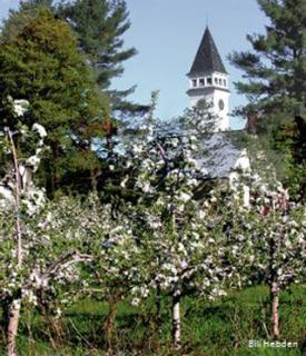 Town Hall among apple blossoms